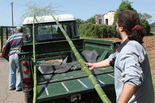 M1_Approvvigionamento canne di bamboo